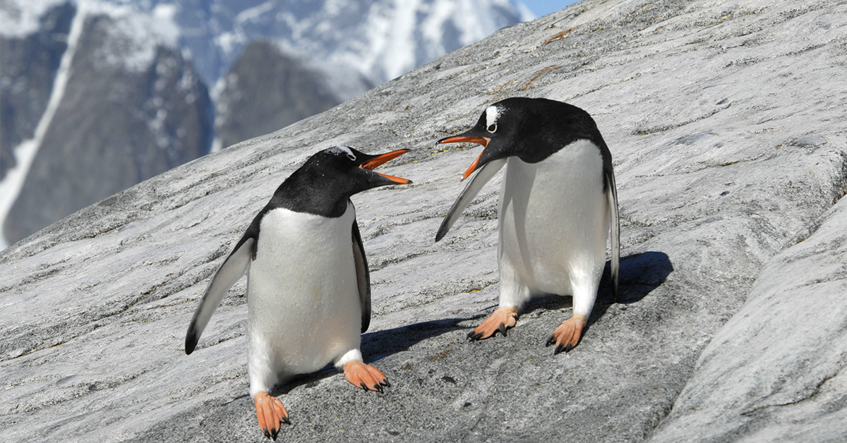 How to communicate more effectively and avoid arguments